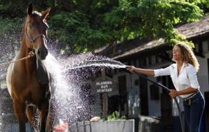 Cavalo tomando banho